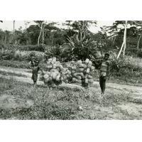 Paniers fabriqués par les lépreux pour les plantations de cacao