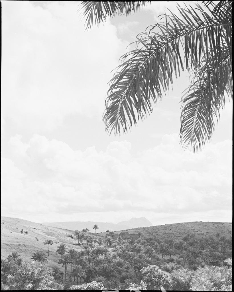 Paysage Bamoun
