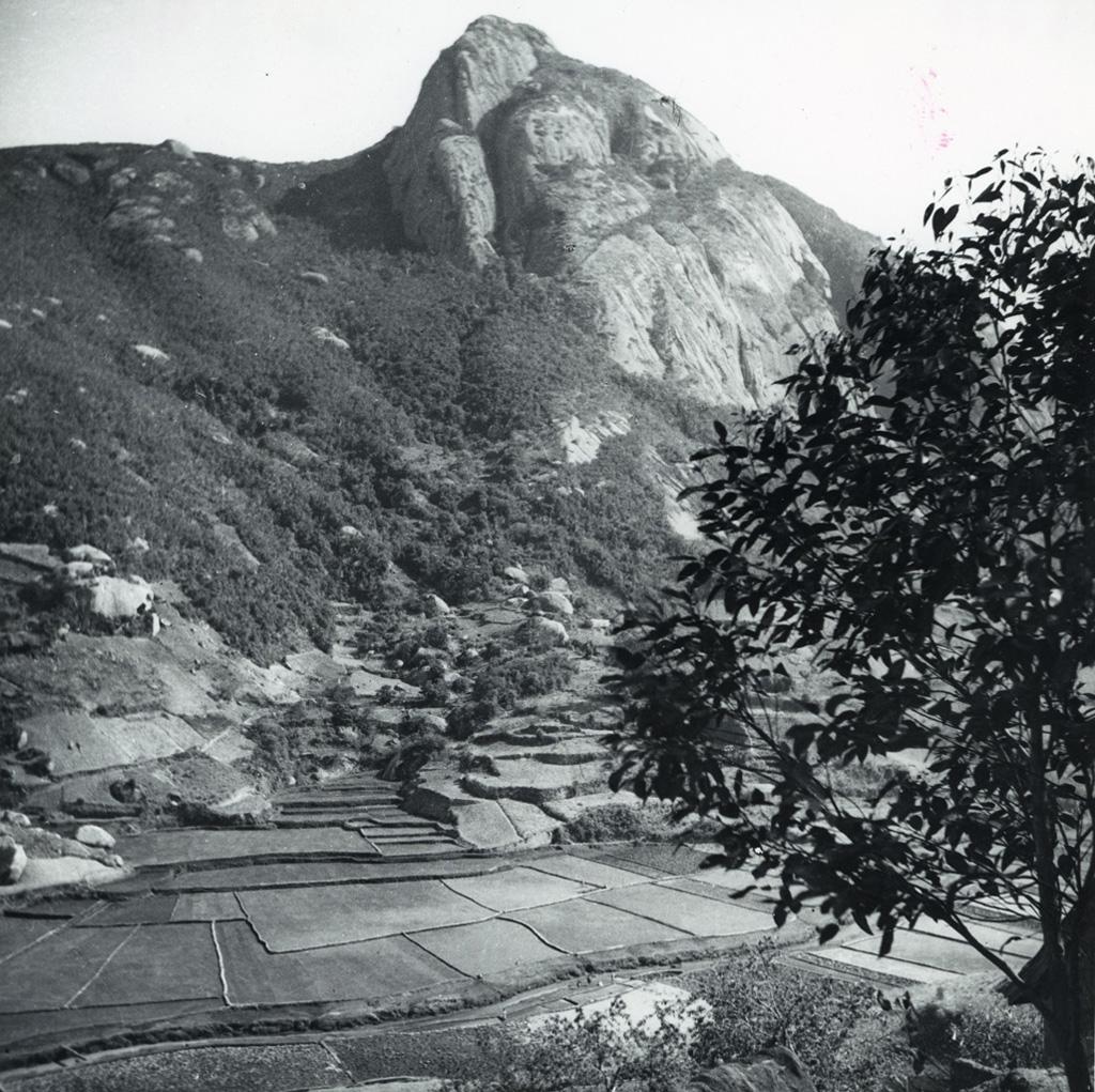 Paysage, au premier plan des rizières, au fond des montagnes
