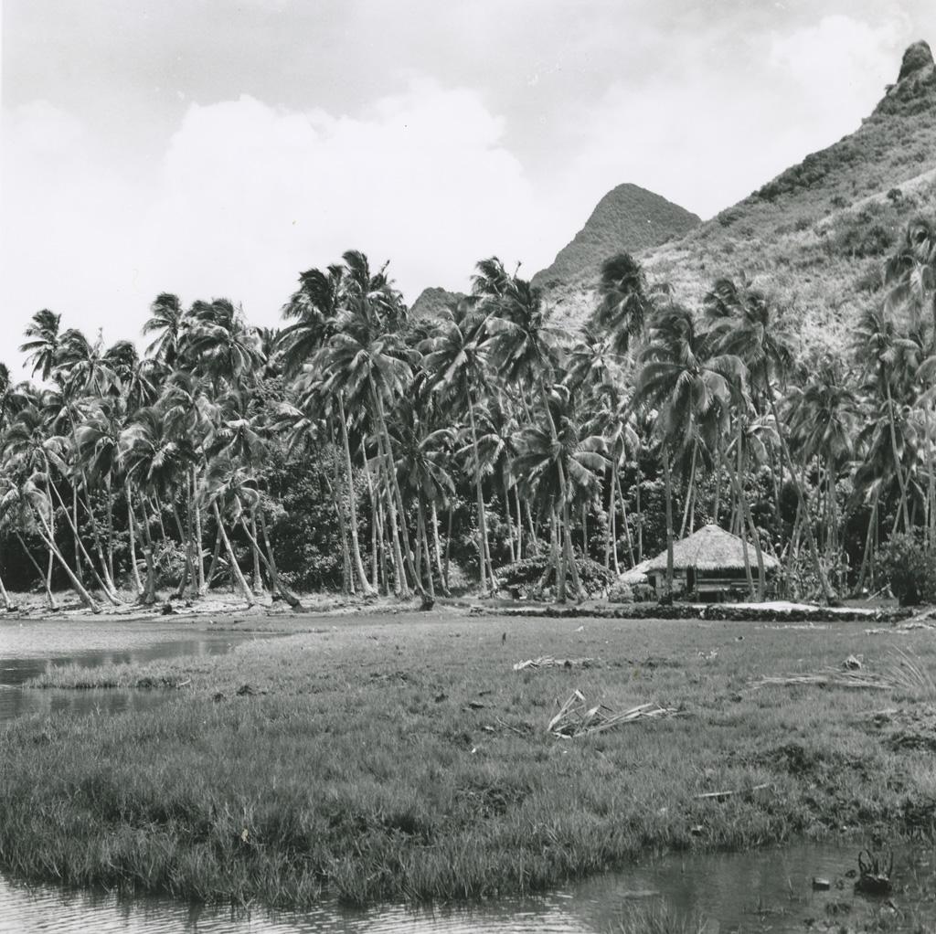 Paysage polynésien, vue depuis le bord du lagon