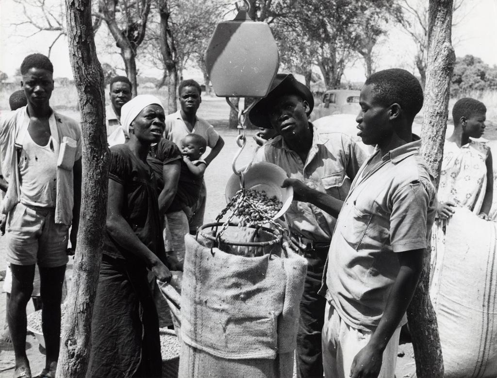 Pesée d'arachides à un point d'achat de la société coopérative de chimalilo, sur la ferme Pharaza, près de Lundazi