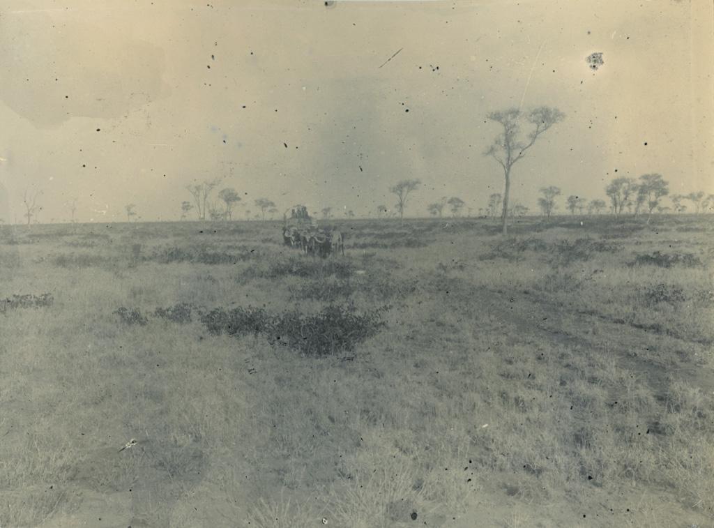 Plaine aride, d'une immense étendue, coupée de quelques arbres et interrompue de ci de là par une forêt