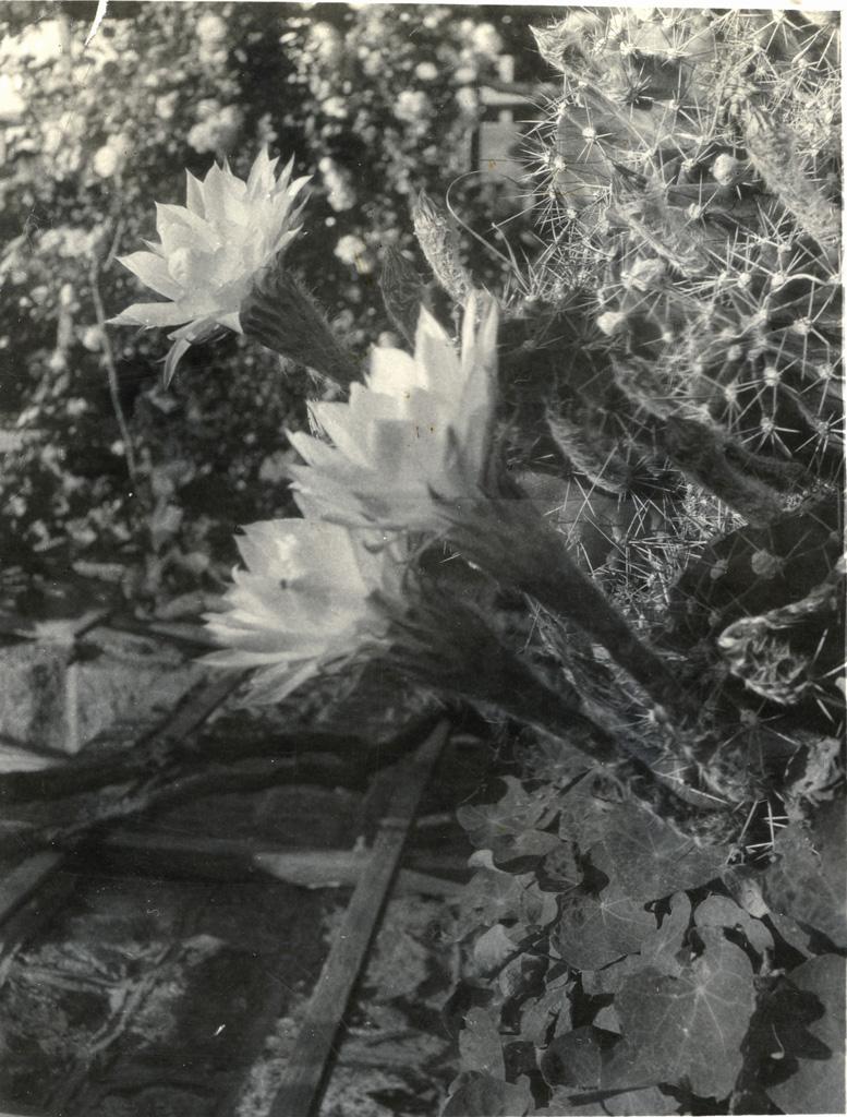 Plantes grasses dans le jardin de la station