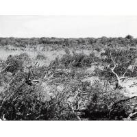 Plus de la moitié du sol de Zambie est couvert de bois mais qui vont de la savane très claire dans la sécheresse du Sud vers les bois de plus en plus denses à mesure qu'on approche les forêts du N