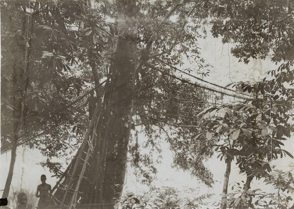Pont de lianes