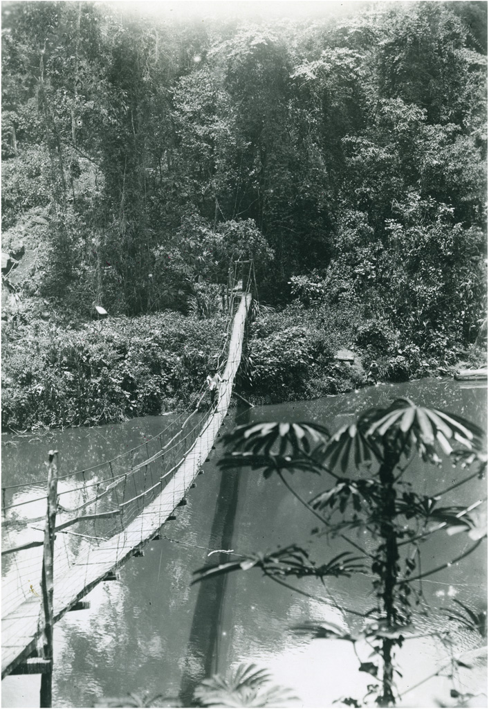 Pont suspendu en forêt, région Bamoun