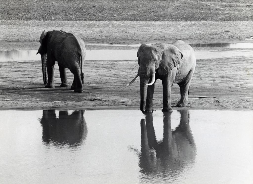 Réserve de Luangwa, éléphants