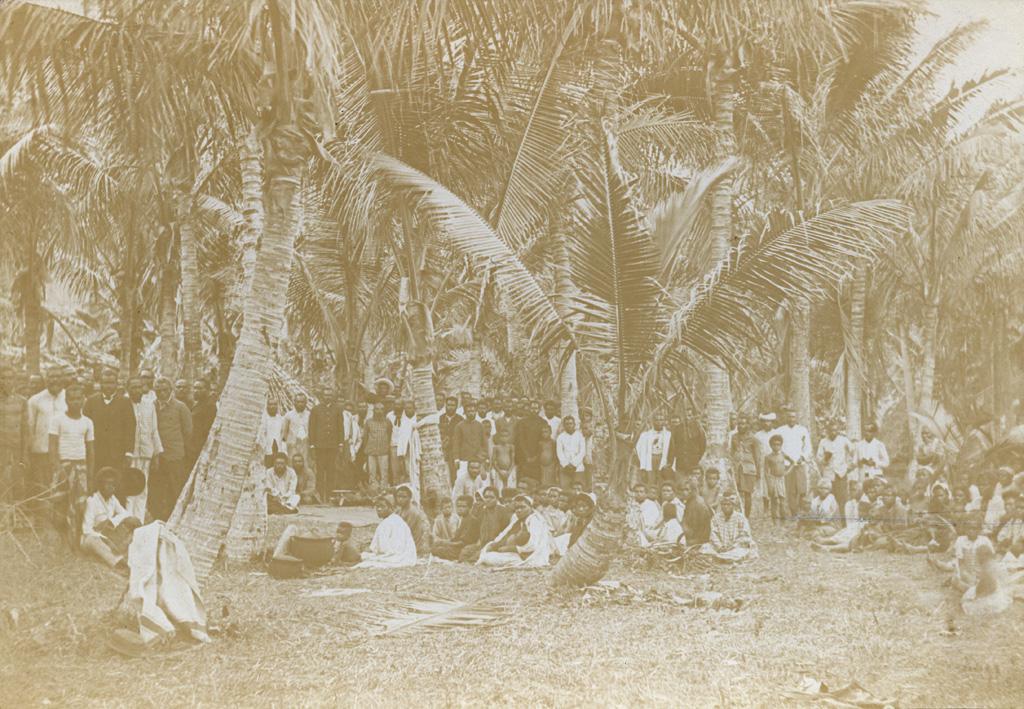 Réunion sous les cocotiers