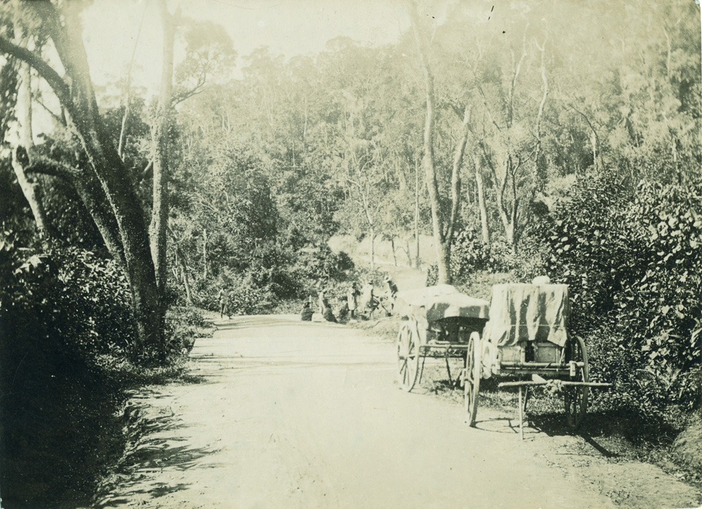 Route Tamatave - Tananarive, forêt de Beforona