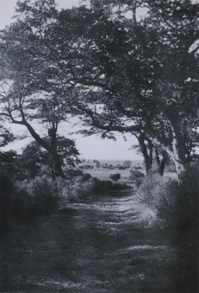 Sentier bordé d'arbres ; Le village de Mule à l'arrière-plan