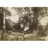 Sentier de brousse à Lambaréné