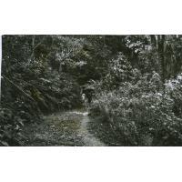 Sentier de forêt, région de Yabomi, sur la route de Lyamtum