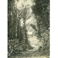 Sentier sous les arbres