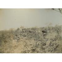 Sur la lisière d'une forêt, route du Zambèze