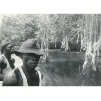Sur la rivière Avebe (les arbres sont des palétuviers)