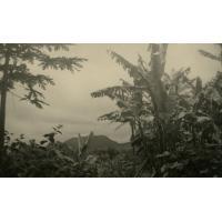 Sur les flancs du Manengouba