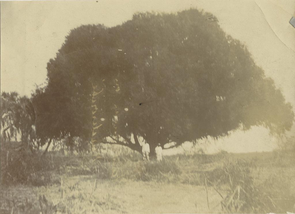 Tananarive ou Madiroubé