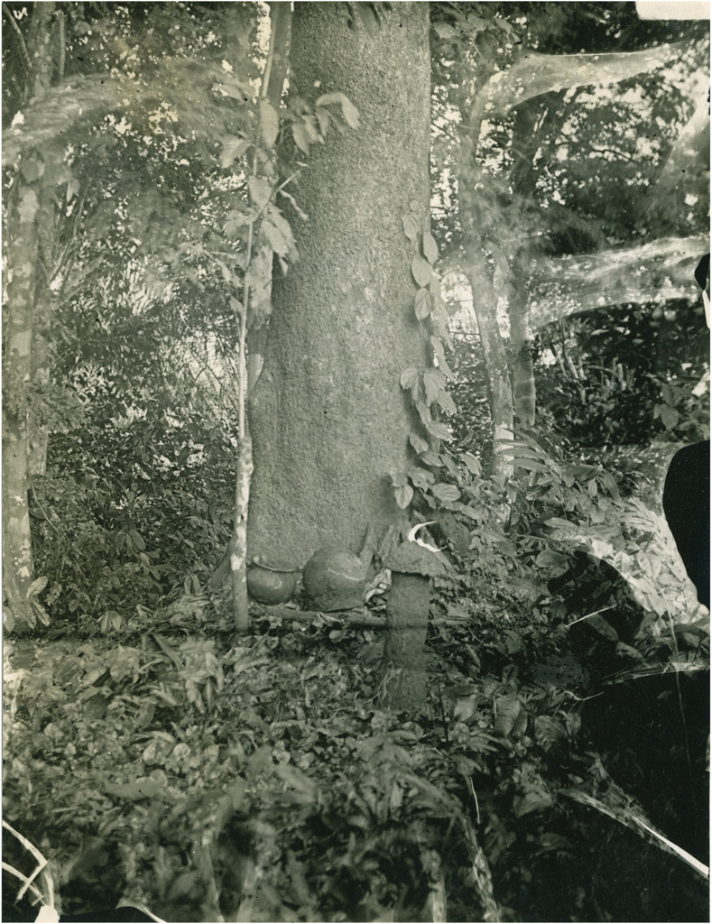 Tronc d'arbre sacré au pied duquel les païens ont offert de la nourriture aux esprits