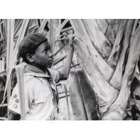 Un éclaireur dans la forêt de Ravinala de la côte est de Madagascar