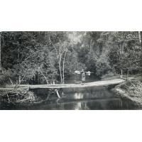 Un pont de bois