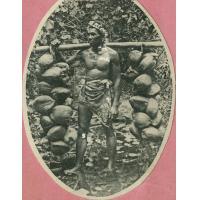 Un porteur de cocos