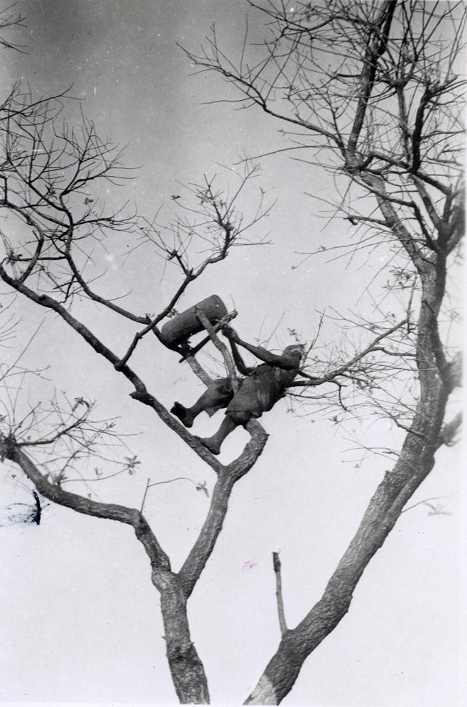 Un tam-tam dans les branches