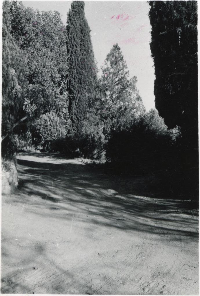 [Une allée bordée d'arbres, station missionnaire de Leribe]