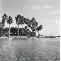 Une plage polynésienne