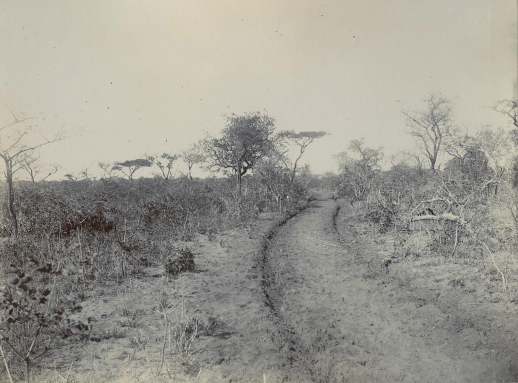Une route de terre parsemée d'arbres et d'arbustes