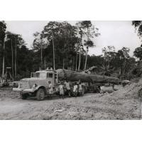 Usine des Bois du Cameroun à Eseka, transport d'une bille de bois
