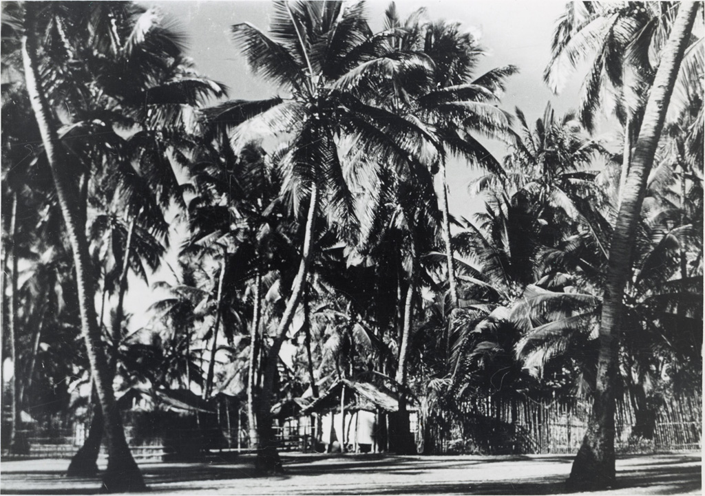 Village et cocotiers