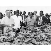président Kaunda visitant un champ lors de sa visite à Kasama. A sa gauche M. Sakubita, ministre d'état pour la province du Nord