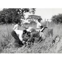 tracteurs dessouchent le sol en vue de la culture